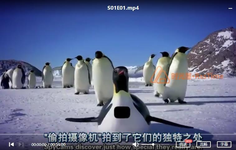 BBC《企鹅群里有特务》[2012][百度云网盘下载]-时光屋