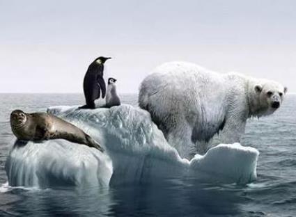全球变暖正迫使热带海洋生物逃往更凉爽水域-时光屋
