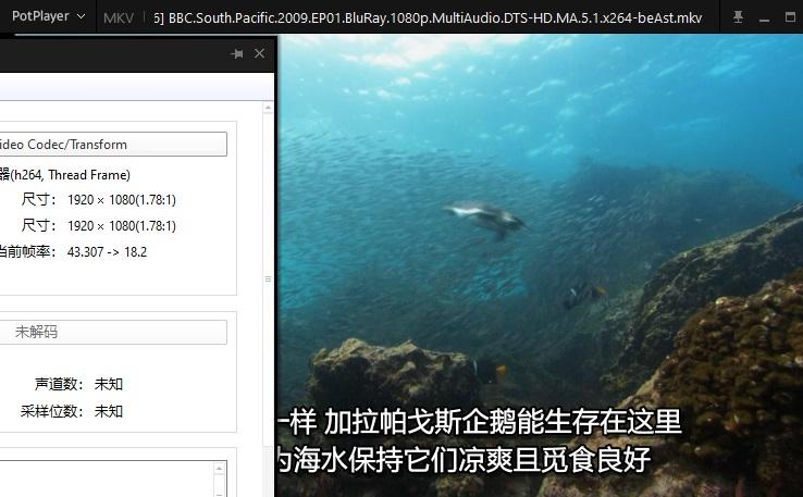 BBC《南太平洋》纪录片蓝光BD1080P[原盘收藏级]百度云网盘下载-时光屋