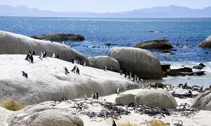 BBC《企鹅岛》纪录片百度云网盘下载-时光屋